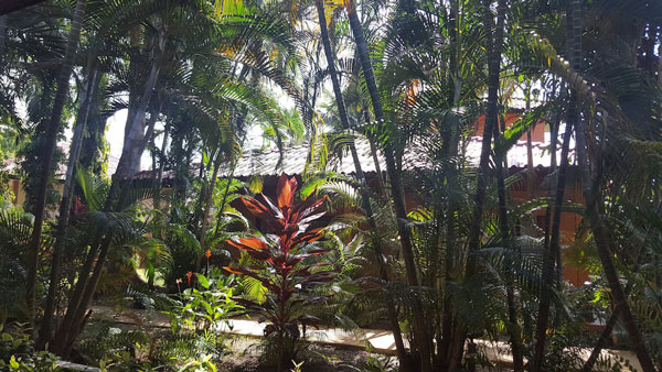 View from my desk in Koh Samui